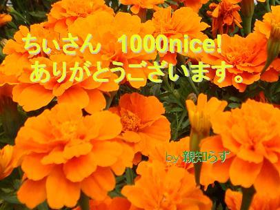 ちぃさんへ1000nice!キリ番カード.JPG