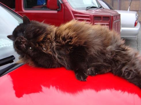 富士宮の猫1.JPG